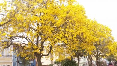 Photo of Primavera começa fria em Viçosa