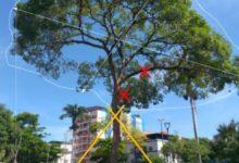 Photo of Prefeitura vai manter ipê da Praça Silviano Brandão