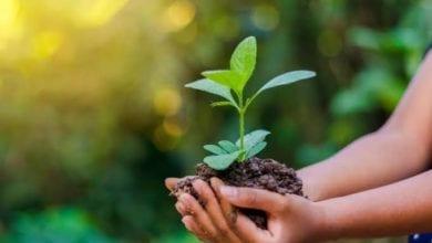 Photo of PMMA realiza formaturas do Programa de Educação Ambiental – PROGRA